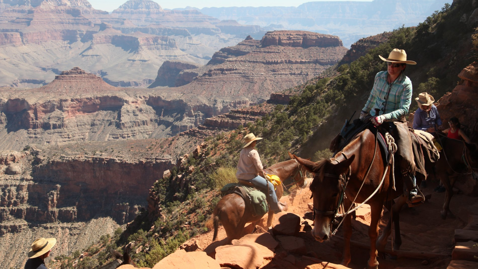 IMG_1020.JPG: catari..., Grand Canyon