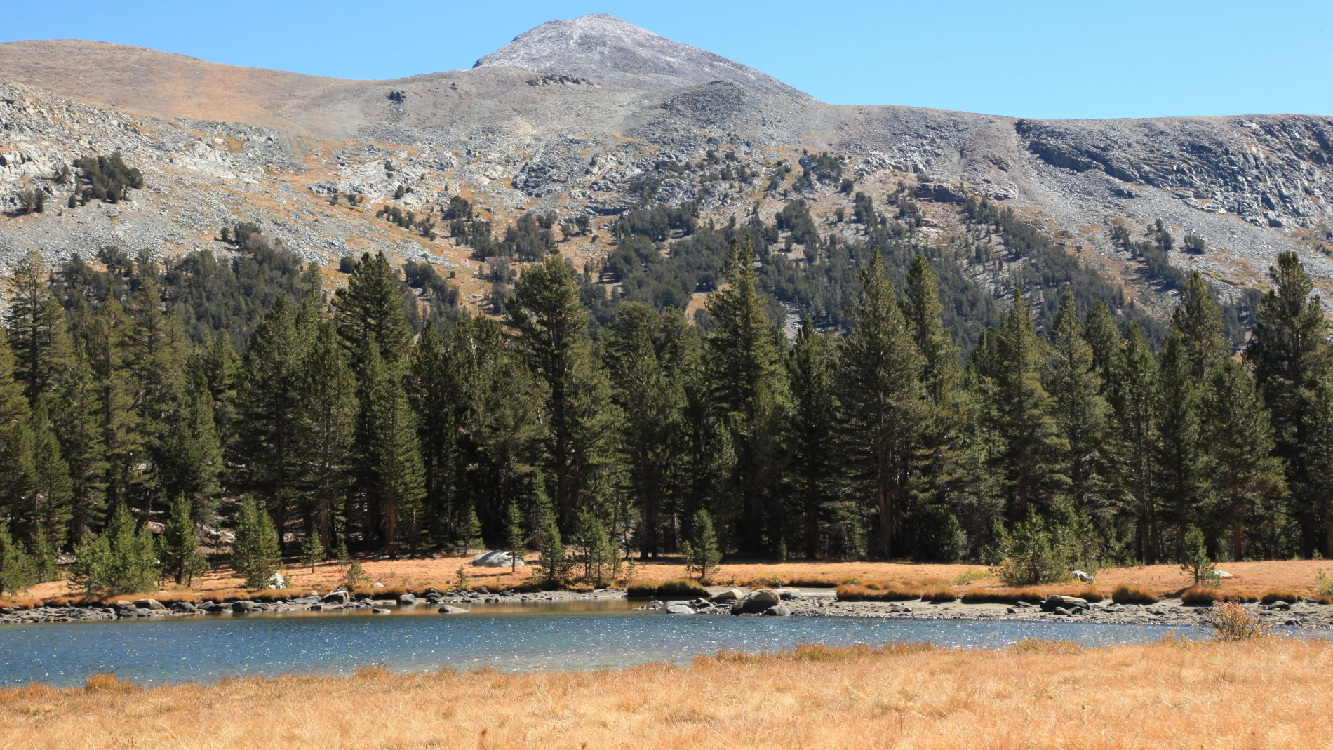 IMG_1260.JPG: Mount Dana in background