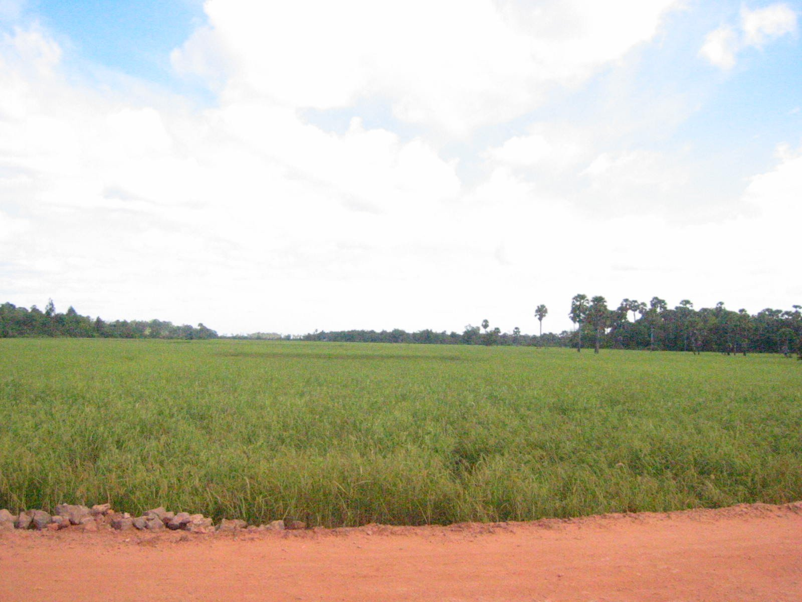 Picture of East Mebon